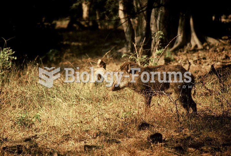 Indian wild boar (Sus scrofa cristatus) at Ranthambore National Park