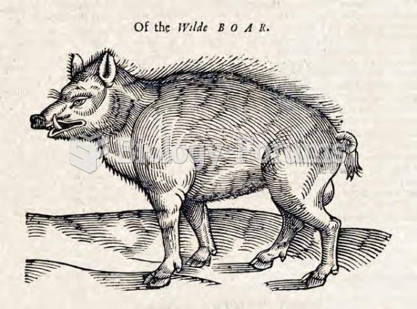 Of the Wilde Boar