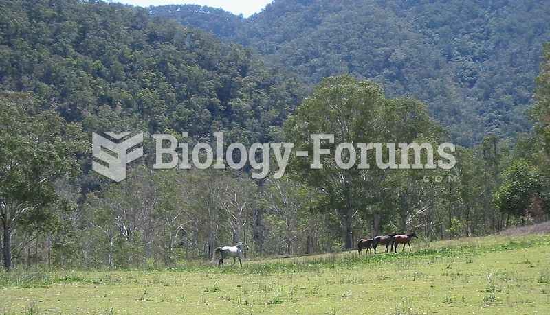 Brumbies on the Chandler River, Oxley Wild Rivers National Park.