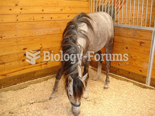 Box stalls in a barn or stable should be of sturdy construction and cleaned daily