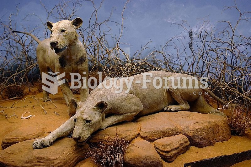 The Tsavo Man-Eaters on display in the Field Museum of Natural History in Chicago, Illinois.