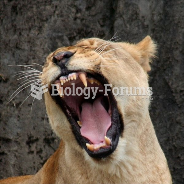 While a lioness such as this one has very sharp teeth, prey is usually killed by strangulation
