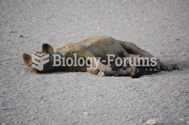 Female nursing cub, Amboseli National Park, Kenya