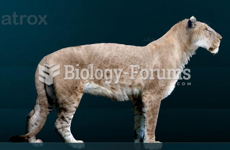 The American Lion was one of the abundant Pleistocene megafauna, a wide variety of very large mammal