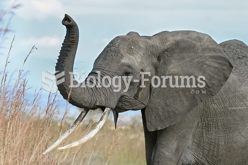 The elephant raises its trunk as a sign of warning or to smell enemies or friends