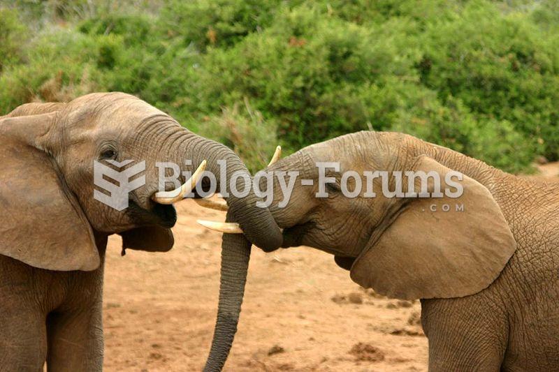 Elephant mating behaviour. 2