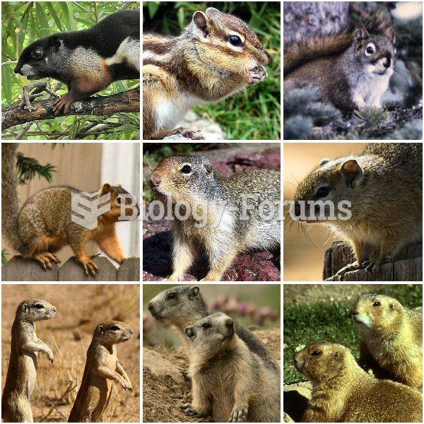 Various members of the Sciuridae family