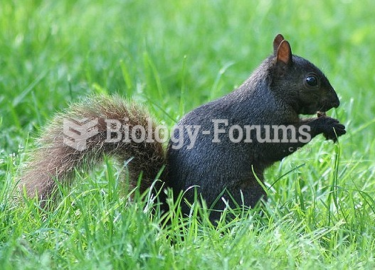 Several species of squirrels have melanistic phases. In large parts of United States and Canada, the