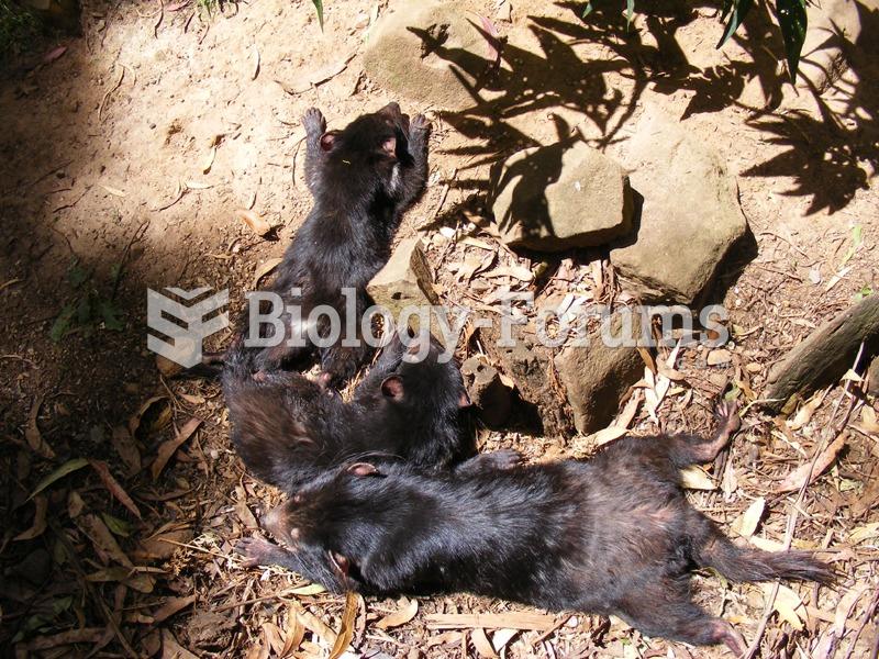 Three young devils sunbathing