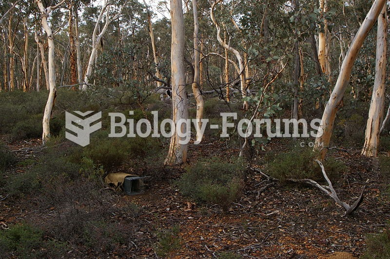Trap set to monitor the wild population in the Dryandra Woodland