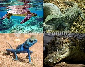 Clockwise from above left: Green turtle (Chelonia mydas), Tuatara (Sphenodon punctatus), Nile Crocod
