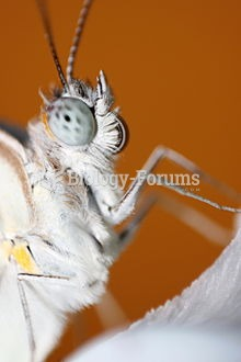 Macro of a Butterfly face