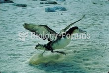 Taking off is one of the main times albatrosses use flapping to fly, and is the most energetically d