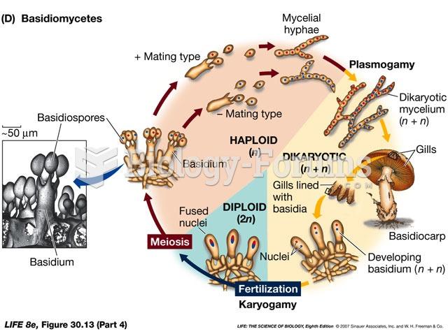 Basidiomycetes Life Cycle