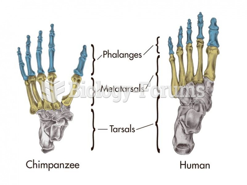 The biped's foot bears more weight than the quadruped's and so the bones are stouter.