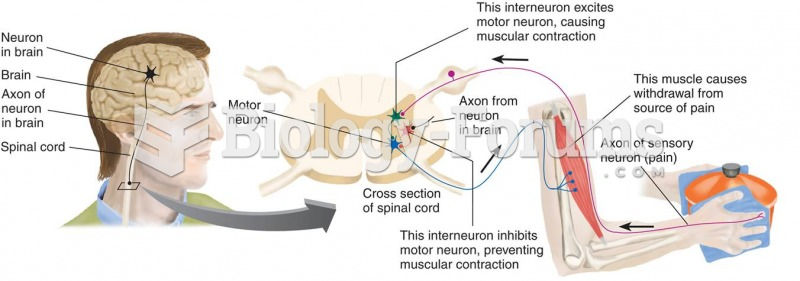 The Role of Inhibition