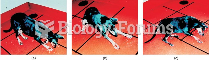 A Dog Undergoing a Cataplectic Attack
