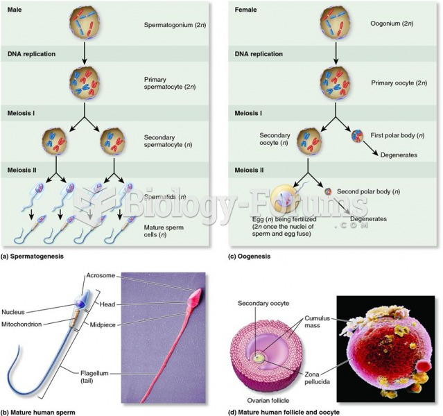 Gametogenesis and gametes in males and females.