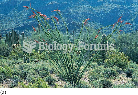 Changing leaf area: (a) following rainfall ocotillo plants of the Sonoran Desert develop leaves and
