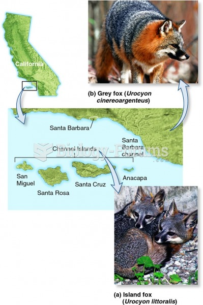 The evolution of an endemic island species from a mainland species.