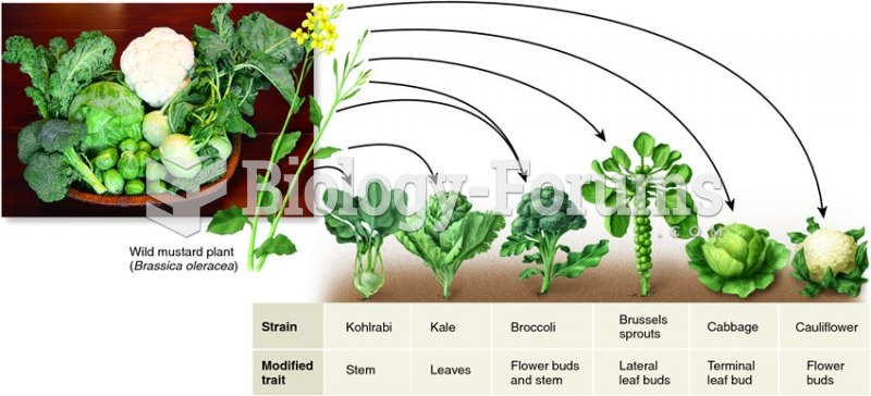 Crop plants developed by selective breeding of the wild mustard plant.