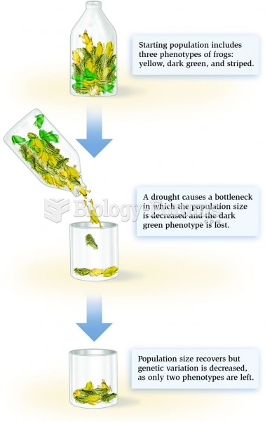 A hypothetical example of the bottleneck effect.