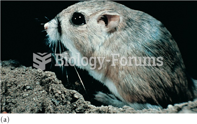 Two species of granivorous rodents living in the Chihuahuan Desert: (a) the kangaroo rat, Dipodomys