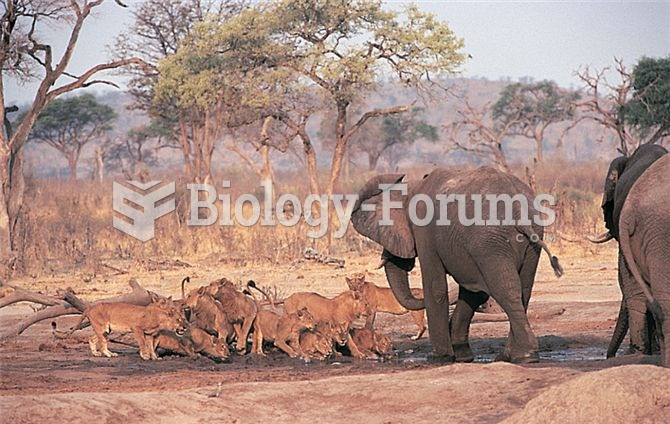Large size can provide a refuge from predators. While young African elephants may be vulnerable to p