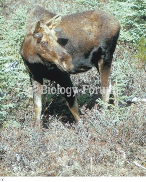(a) With few ticks, moose retain a brown coat; (b) at high numbers of ticks, moose self-groom, destr