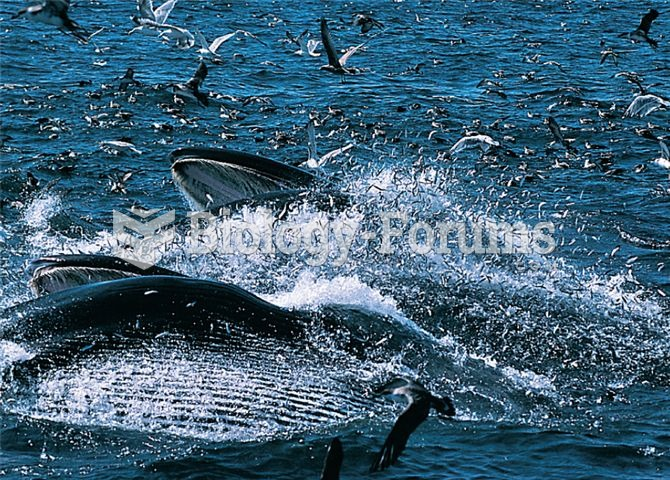 A marine food web in action: feeding baleen whales and birds.