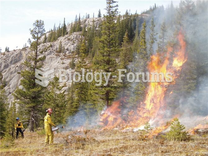 A controlled fire being set as part of ecosystem management in Jasper National Park.