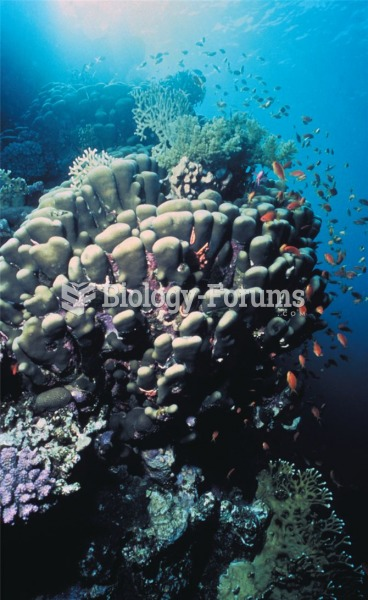 A rich diversity of life lives in and among coral reefs.
