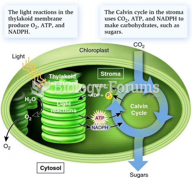 An overview of the two stages of photosynthesis: light reactions and the Calvin cycle