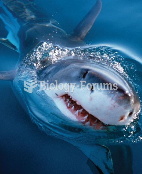Shark - These species are all at risk of extinction