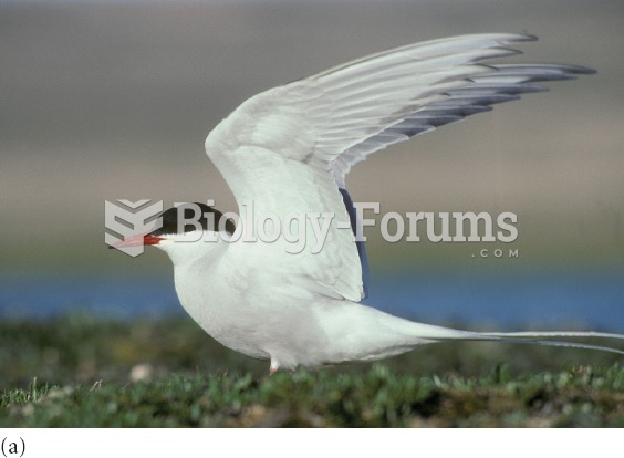 During their annual migration, the entire population of Arctic terns move from the Arctic Ocean in t