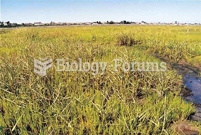 The salt marsh grass Spartina anglica originated on the coast of England as a hybrid of European and
