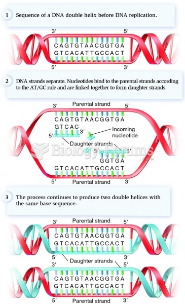 DNA replication according to the AT/GC rule