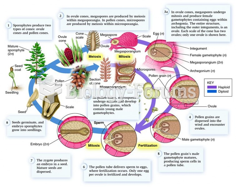 The life cycle of the genus Pinus