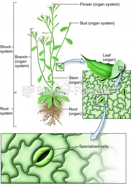 Levels of biological organization in a plant.