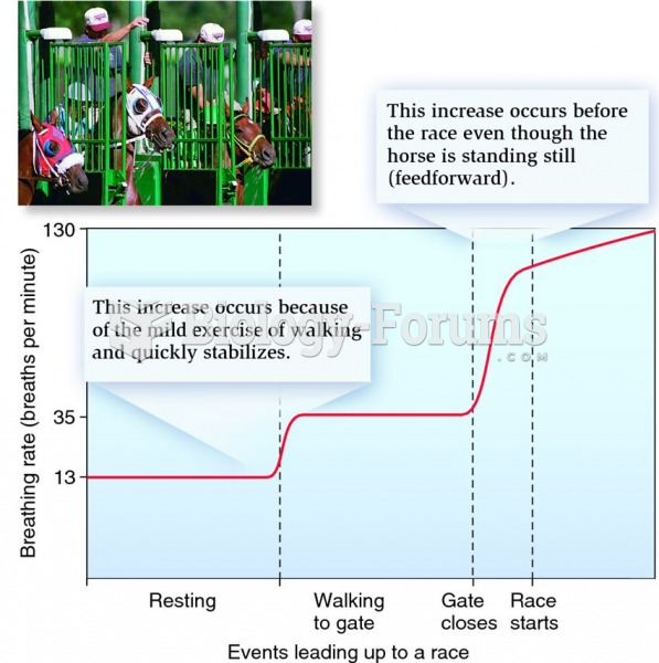Feedforward control of breathing rate in an animal trained for athletic exercise.