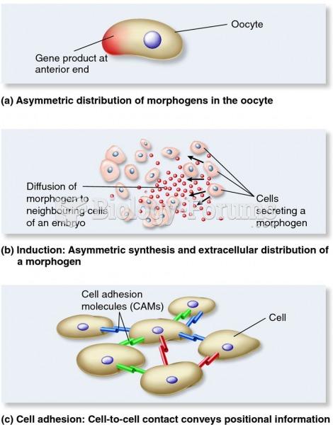 Molecular mechanisms that convey positional information.
