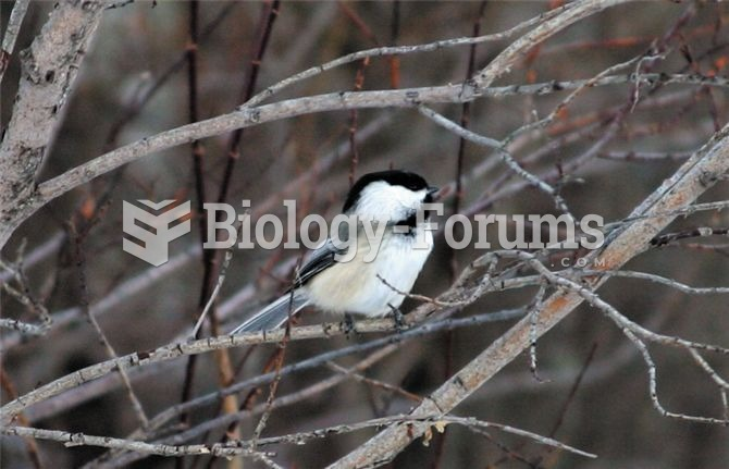 The black-capped chickadee is a permanent resident in biomes with harsh winter conditions.
