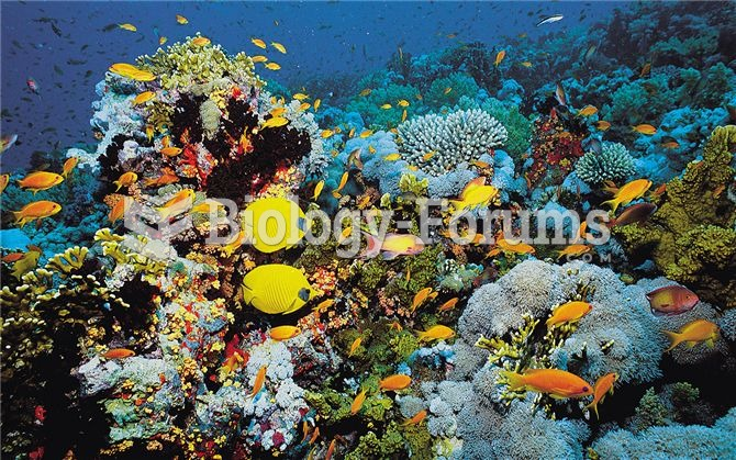 Coral reefs, such as this one in the Red Sea, support some of the most diverse assemblages of organi
