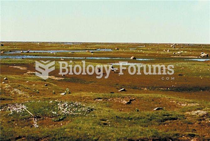 The salt marsh at La Perouse Bay, east of Churchill, Manitoba.