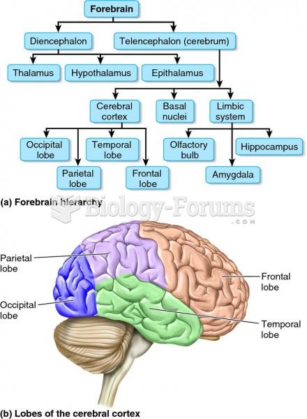 The human forebrain.