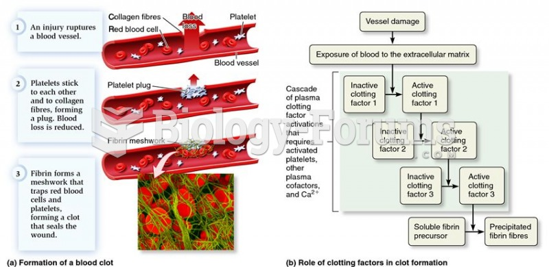 Platelets and the process of blood clot formation.