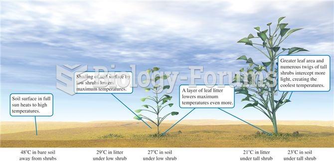 Desert shrubs create distinctive thermal microclimates in the desert landscape