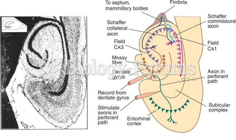 The Hippocampal Formation and Long-Term Potentiation