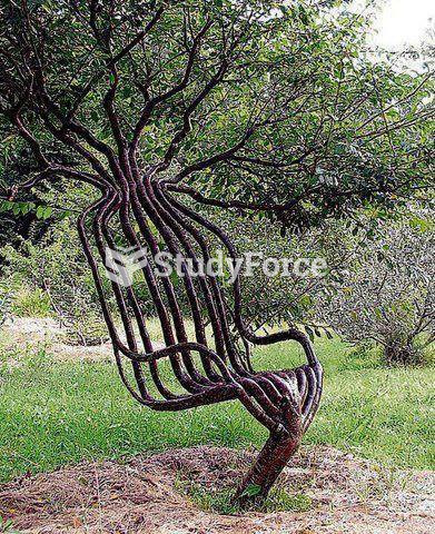 Chair made from tree