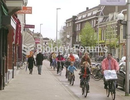 People riding bikes in Netherlands